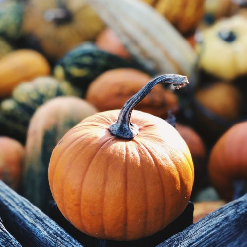 The Autumn Tag – My Favorite Things About Fall