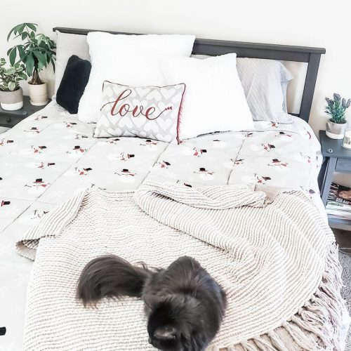 winter bedding with cat