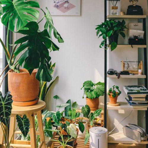 How You Can Became a Plant Lady With a Black Thumb