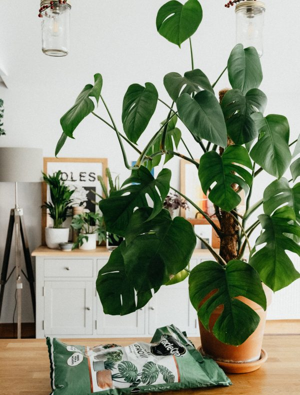 5 Simple Tips For Summer Decorating At Home